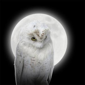 Isolated White Owl In Night With Moon by Angela_Waye