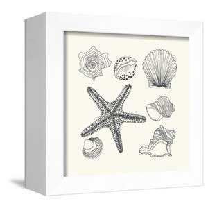 Hand- Drawn Shells Set by Angelina Stoykova