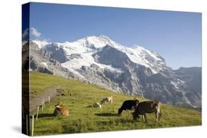 Jungfrau, Kleine Scheidegg, Bernese Oberland, Berne Canton, Switzerland, Europe by Angelo Cavalli