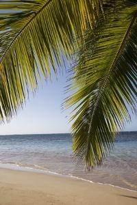 Las Terrenas, Samana Peninsula, Dominican Republic, West Indies, Caribbean, Central America by Angelo Cavalli