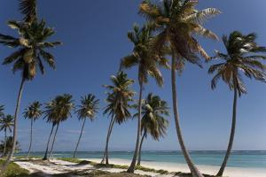 Punta Cana, Dominican Republic, West Indies, Caribbean, Central America by Angelo Cavalli