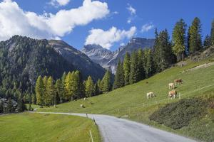 Road to Albula Pass, Graubunden, Swiss Alps, Switzerland, Europe by Angelo Cavalli