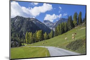 Road to Albula Pass, Graubunden, Swiss Alps, Switzerland, Europe by Angelo Cavalli