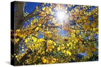 Sun Through Autumn Leaves, Switzerland, Europe