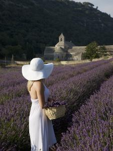 Woman in a Lavender Field, Senanque Abbey, Gordes, Provence, France, Europe by Angelo Cavalli