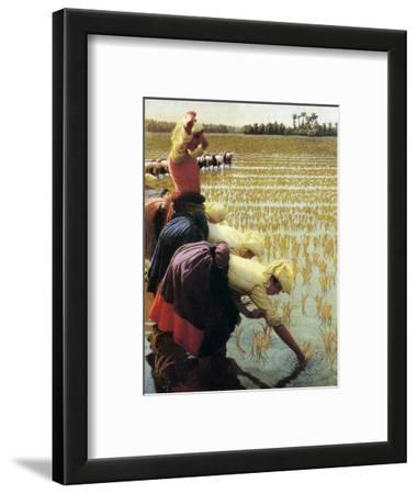 An Italian Rice Field, 1901