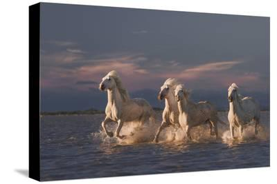 Angels Of Camargue-Rostovskiy Anton-Stretched Canvas Print