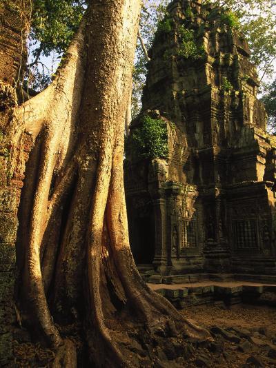 Angkor, Ta Prohm, 400-year-old Tree, Cambodia-Walter Bibikow-Photographic Print