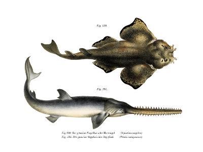 Angle Shark--Giclee Print