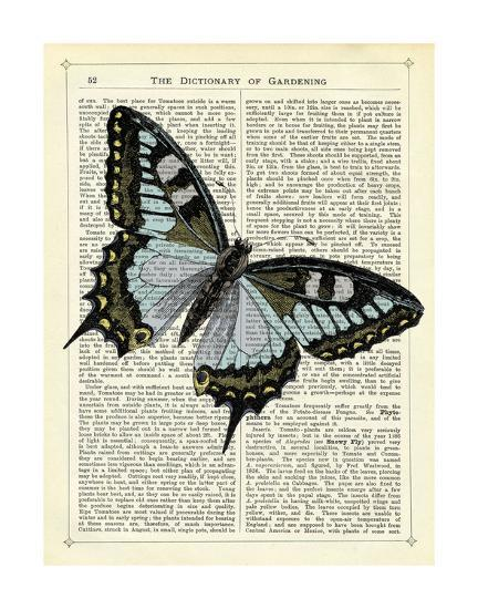 Angled Butterfly-Marion Mcconaghie-Art Print