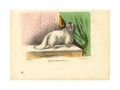 Angora Cat, 1863-79-Raimundo Petraroja-Giclee Print