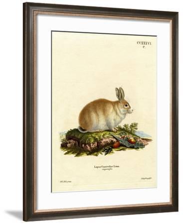 Angora Rabbit--Framed Giclee Print