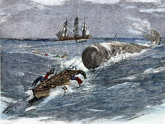 Angry Whale Chasing a Harpoon Boat--Giclee Print