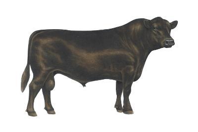 Angus Bull, Beef Cattle, Mammals-Encyclopaedia Britannica-Art Print