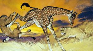 Giraffe Kicking Lion by Angus Mcbride