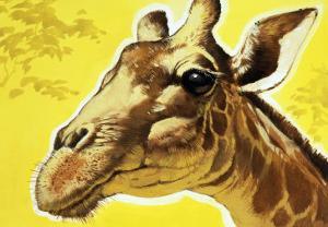 Giraffe's Head by Angus Mcbride