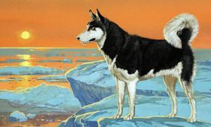 Husky Dog by Angus Mcbride