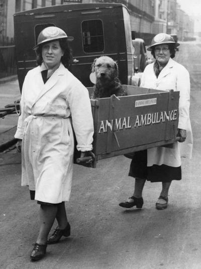 Animal Ambulance--Photographic Print