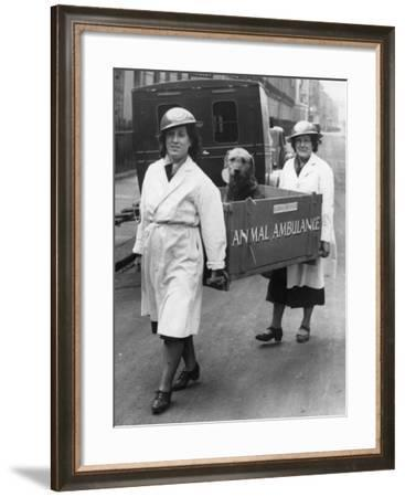 Animal Ambulance--Framed Photographic Print