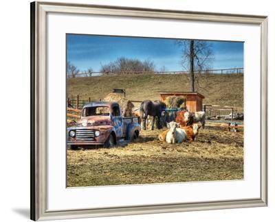 Animal Farm--Framed Photographic Print