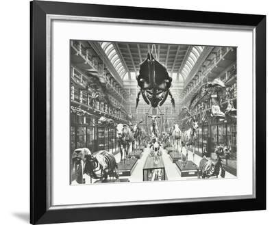 Animal Skeletons at the Royal College of Surgeons, Westminster, London, 1911--Framed Photographic Print
