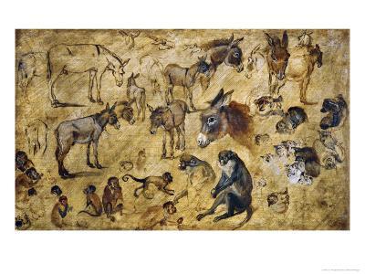 Animal Studies: Donkeys, Cats, Monkeys-Jan Brueghel the Elder-Giclee Print