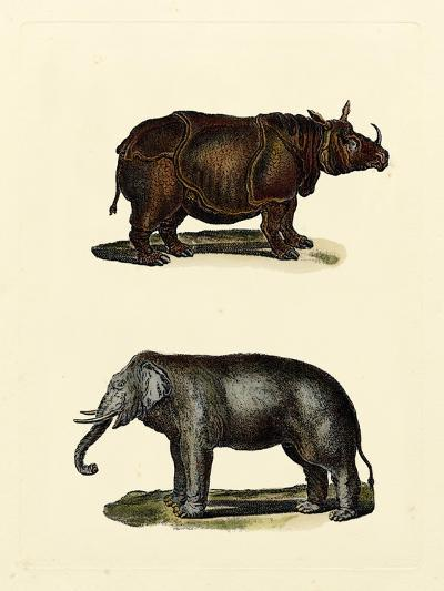Animal Studies IV-Vision Studio-Art Print
