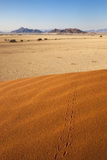 Animal Tracks in Sand, Namib Desert, Namibia, Africa-Ann and Steve Toon-Photographic Print