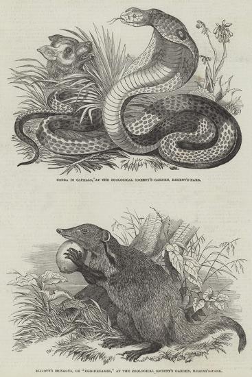 Animals at London Zoo--Giclee Print