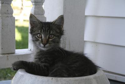 Animals Cats Kitten in Bowl-Jeff Rasche-Photographic Print