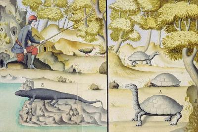 Animals Encountered in the Galapagos Islands--Giclee Print