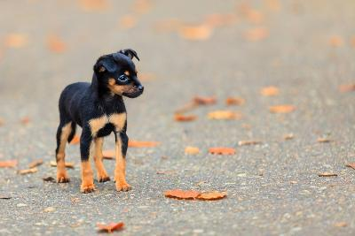 Animals Homeless. Little Dog Cute Puppy Pet Outdoor- Voyagerix-Photographic Print