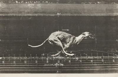 Animals in motion / Dog-Vladimir Velickovic-Limited Edition