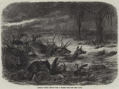 Animals Taking Refuge from a Prairie Fire-Johann Baptist Zwecker-Giclee Print