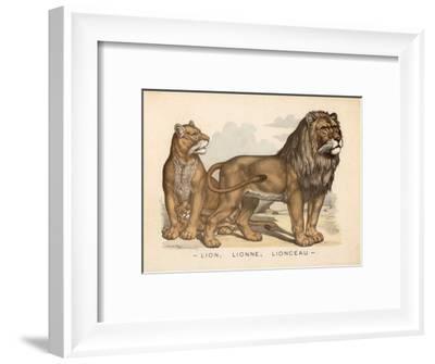Animaux d'Afrique, Lion--Framed Art Print