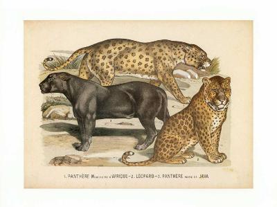 Animaux d'Afrique, Panthere--Art Print