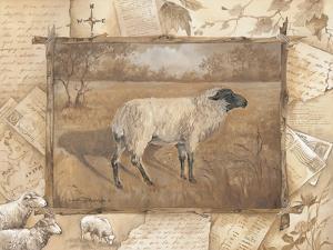 Sheep by Anita Phillips