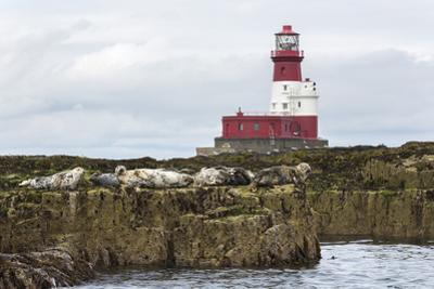 Grey seals (Halichoerus grypus) near Longstone lighthouse, Longstone Rock, Farne Islands, Northumbe by Ann and Steve Toon