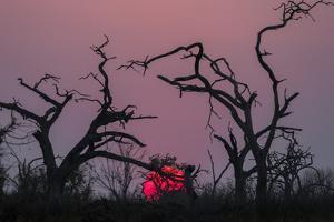 Sunset, Chobe National Park, Botswana, Africa by Ann and Steve Toon