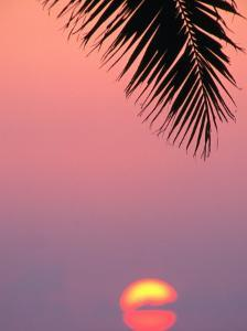 Palm Frond Silhouetted at Sunset, U.S.A. by Ann Cecil