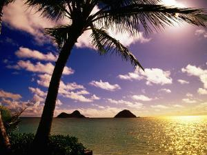 Palm Trees on the Beach at Sunset, Lanikai, U.S.A. by Ann Cecil