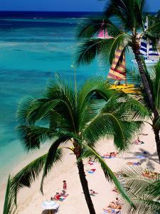 Palm Trees Over Waikiki Beach, Waikiki, U.S.A. by Ann Cecil