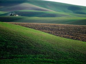 Rolling Hills and Ploughed Field in Spring, Palouse, U.S.A. by Ann Cecil