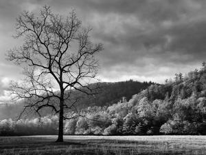 North Carolina, Great Smoky Mountains National Park, Storm Clearing at Dawn in Cataloochee Valley by Ann Collins