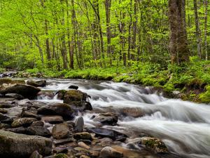 North Carolina, Great Smoky Mountains National Park, Water Flows at Straight Fork Near Cherokee by Ann Collins