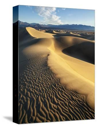 USA, California, Death Valley National Park. Early Morning Sun Hits Mesquite Flat Dunes