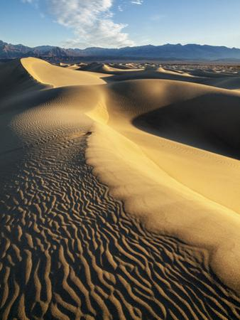 USA, California, Death Valley National Park. Early Morning Sun Hits Mesquite Flat Dunes by Ann Collins