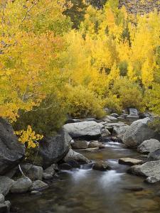 USA, California, Eastern Sierra. Bishop Creek During Autumn by Ann Collins