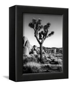 USA, California, Joshua Tree National Park at Hidden Valley by Ann Collins