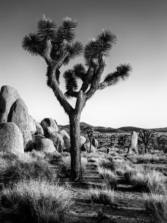 USA, California, Joshua Tree National Park at Hidden Valley